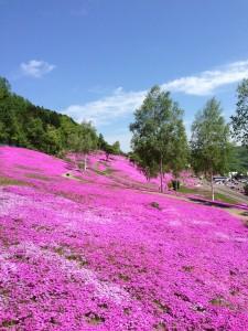 滝上公園 芝桜