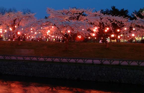 五稜郭 桜 ライトアップ