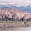 【GW】は桜色に染まる!五稜郭タワーの上から桜を見てみるのもオススメ!